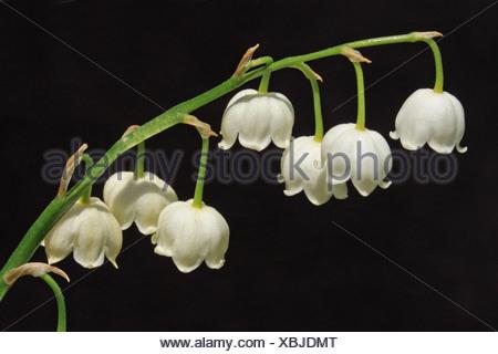 bloeiwijze zijaanzicht - Stock Photo
