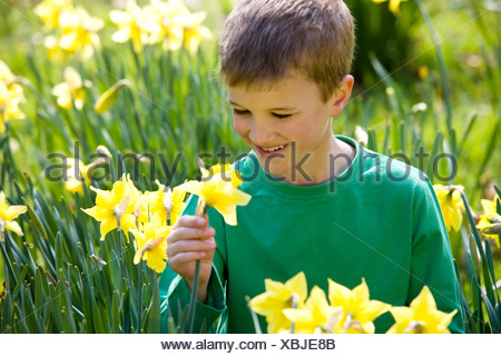 A young boy holding a daffodil, smiling - Stock Photo