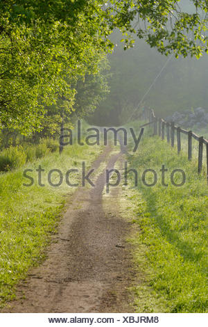 Sweden, Uppland, Lidingo, Fence along country road - Stock Photo