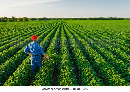A man in a mid growth soybean field, Manitoba, Canada