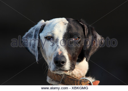 Dog Breed With Spot Over Eye