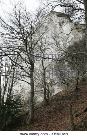 chalk rock Koenigsstuhl at wintertime - Stock Photo