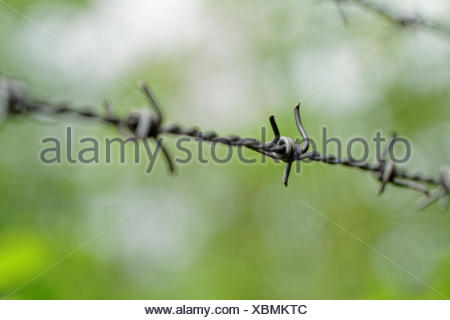 Barbed wire on green background - Stock Photo