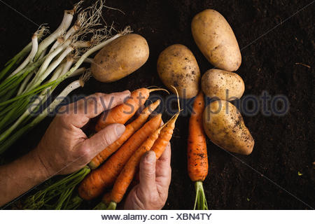 Fruits of the earth - Stock Photo