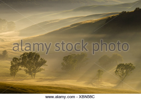 Italy, Tuscany, Crete, View of trees and fog in morning - Stock Photo