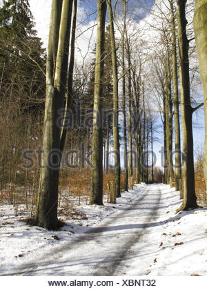 Forest way, trees, bald, snow, winter, nature, season, wintry, lanes, way, country road, forest road, wood, trees, broad-leaved trees, conifers, mixed forest, outside, deserted, - Stock Photo