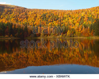 autumn wood in Vosges mountains at Lac Blanchemer, France, Alsace, Vosges Mountains - Stock Photo
