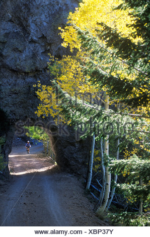 A young woman pedals her mountain bike through a rock tunnel surrounded by golden aspen leaves in the San Francisco Peaks near F - Stock Photo