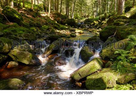 Steinklamm, Große Ohe, Spiegelau, Bayerischer Wald, Niederbayern, Bayern, Deutschland - Stock Photo