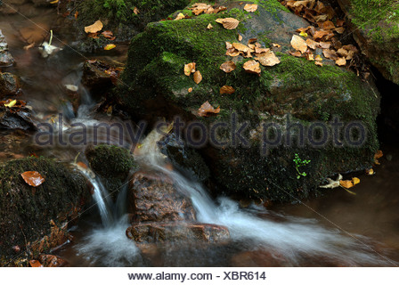 Tabarz, Germany, an autumnal stream in the Thuringian Forest - Stock Photo