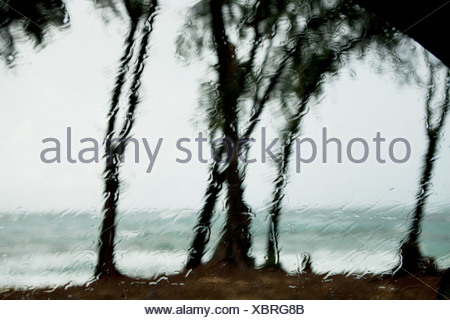Raindrops on window and view of palm trees - Stock Photo