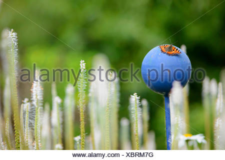 small tortoiseshell (Aglais urticae, Nymphalis urticae), on a garden decoration, Germany - Stock Photo