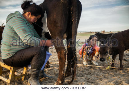 A young girl watches as her mother milks their cow. In the summer, nomad children leave boarding school and urban life, and come back to their families in the steppe. - Stock Photo