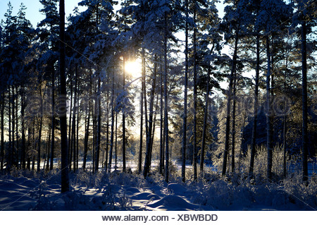 Landscape with sunlight amid trees in winter - Stock Photo
