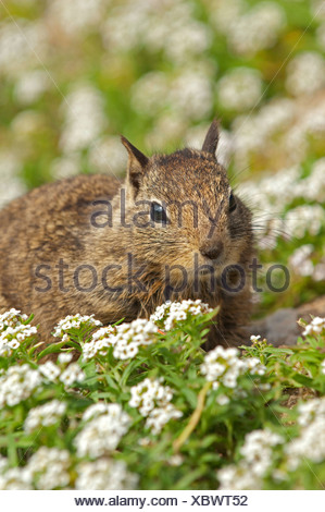 squirrels sitting on a carpet of white blossoms - Stock Photo