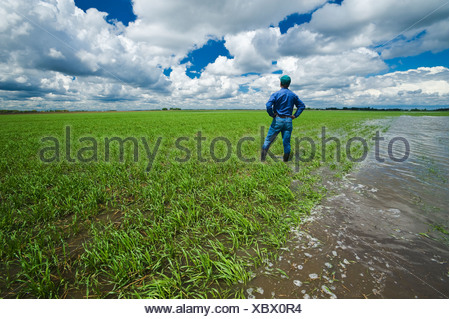 A farmer in a flooded early growth barley field, developing storm clouds in the sky, near Niverville, Manitoba, Canada - Stock Photo