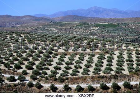 Agriculture in Crete, Greece. - Stock Photo