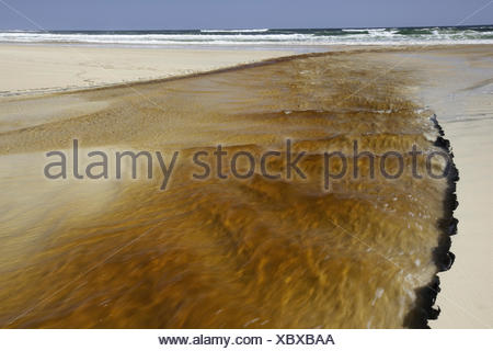 Tannin water from a creek flowing into the ocean in the southern part of the island,  Fraser Island, Australia. - Stock Photo