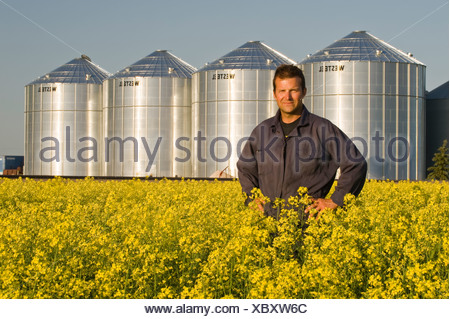 a farmer looks at his bloom stage canola with grain bins(silos) in the background, Lorette, Manitoba, Canada - Stock Photo