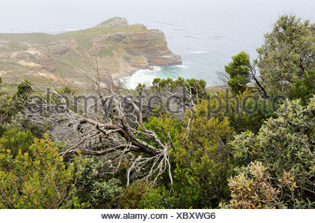 Diaz Beach, Cape of Good Hope, view from Cape Point, Cape Province, South Africa, Africa - Stock Photo