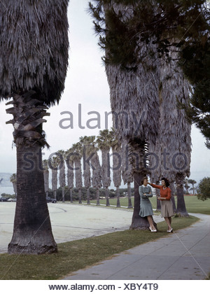 Girls chat while leaning against giant palm trees in a seaside suburb. - Stock Photo