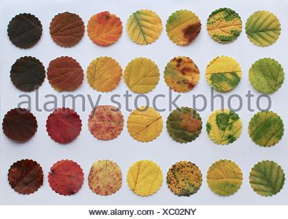 Directly Above View Of Leaves On White Background - Stock Photo