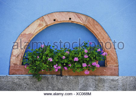 House wall in blossom, Blienschwiller, France - Stock Photo