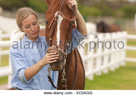 Woman putting reins on a horse - Stock Photo