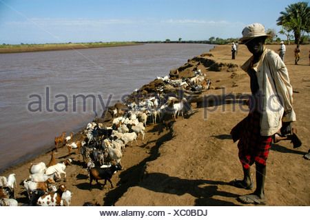 Shepard with goats at Omo River, Dashenesh people, Ethiopia, Africa - Stock Photo