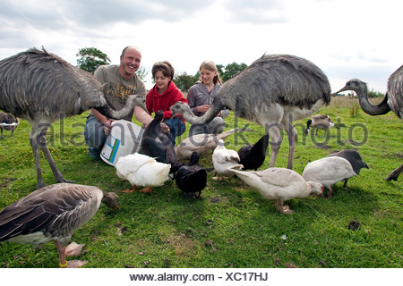 girls with keeper feeding birds in a meadow, Germany - Stock Photo
