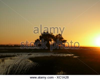 Trees On Field Against Sunset Sky - Stock Photo