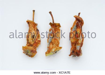Rotting apple cores - Stock Photo