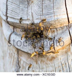 hive - Stock Photo