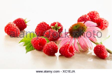 Raspberry, Rubus idaeus cultivar. Several berries arranges with a single Echinacea purpurea flower on white marble. Selective focus. - Stock Photo