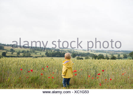 Rear view of a boy standing in a wheat field with poppies - Stock Photo