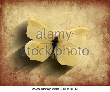 Vintage sepia butterfly with shadow on a grunge background with shadow - Stock Photo