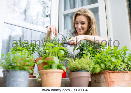 Woman clipping herb plants on windowsill - Stock Photo