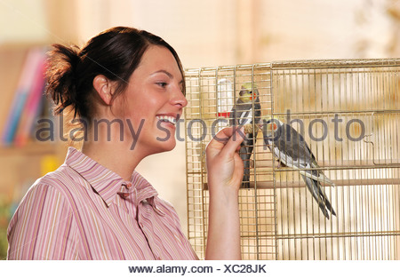 woman feeding two cockatiels in cage - Stock Photo