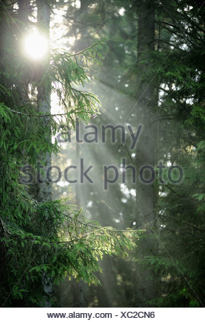 Sunlight in wood glide - Stock Photo