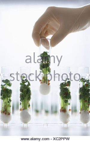 Person holding test tube containing cress seedlings - Stock Photo