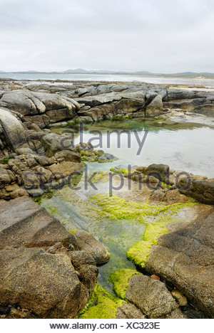 Granite rocks surrounding a tidal pond with green algae on the north coast of Co Donegal, Ireland - Stock Photo