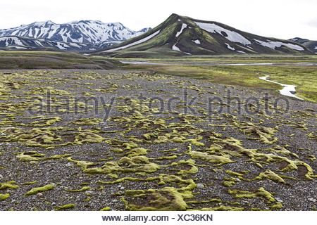 Shreds of moss covered the lava surfaces on a plateau in Fjallabak Nature Reserve, Highlands, Iceland, Europe - Stock Photo
