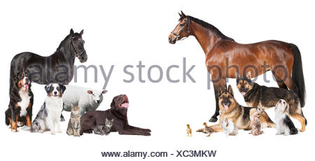 many animals collage - Stock Photo