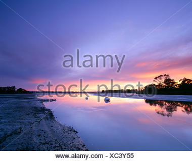 New Zealand. Manukau Harbour. Bottletop Bay at dawn. - Stock Photo