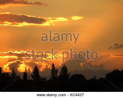 Silhouette Trees Against Orange Sky During Sunset - Stock Photo