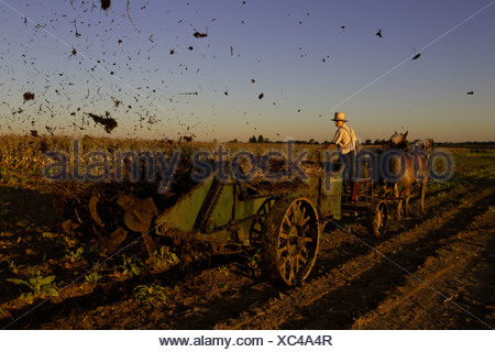 Amish farmers spreading manure from his cows on a corn field that was recently harvested on his farm in Oxford, PA. - Stock Photo