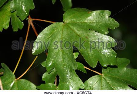 journal of hawthorn in the rain - Stock Photo