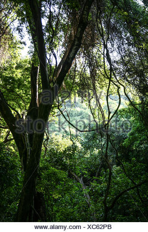 Nechisar national park, area of Semien Omo, part of the region of the Southern Nations, Ethiopia, forty sources area - Stock Photo
