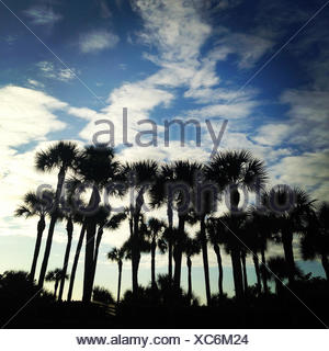 USA, Florida, Silhouette of palm trees - Stock Photo