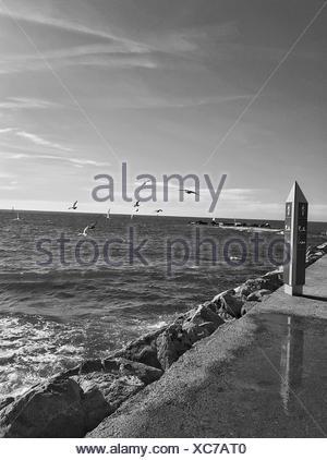 Flock Of Birds Flying Over Sea Against Sky - Stock Photo